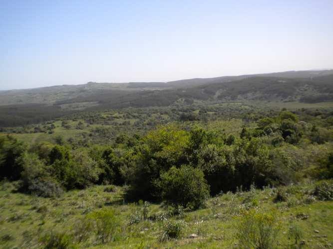 Chacra  en   Pueblo Garzon