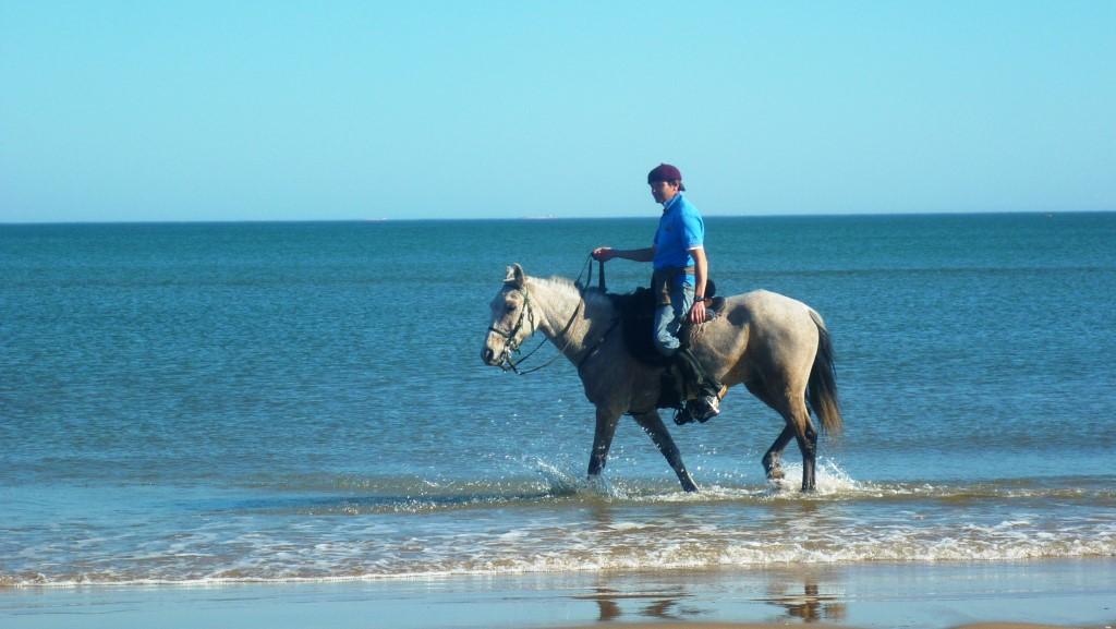 585_horsey gaucho