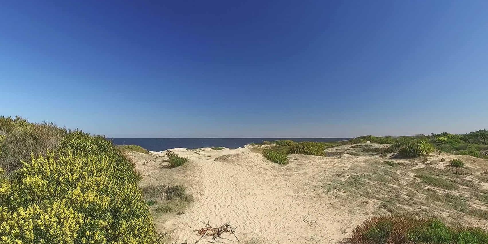 Terreno en Venta en Punta del Este Sauce de Portezuelo